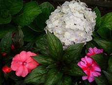 Baguio flowers image